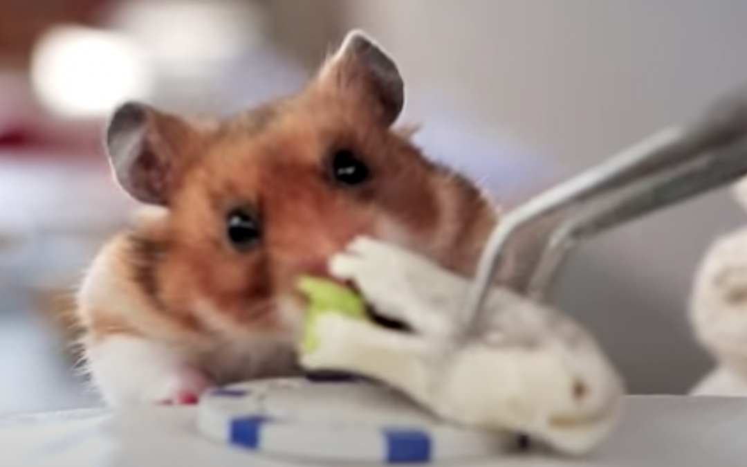 Just for fun Friday – Tiny Hampster eating a Tiny Burrito